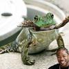 Yo-frog-abba4d