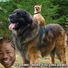 Yo_dog